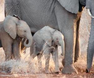Mama, die Steuerung der kleine Elefant puzzle