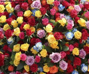 Mehrfarbige Rosen puzzle