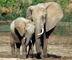 Mom Steuerung der kleine Elefant mit der Hilfe ihres Rüssel puzzle