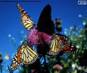 Monarchfalter puzzle