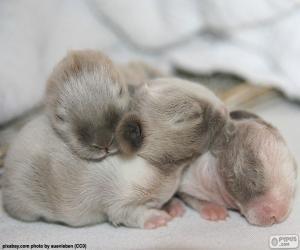 Neugeborene Kaninchen puzzle