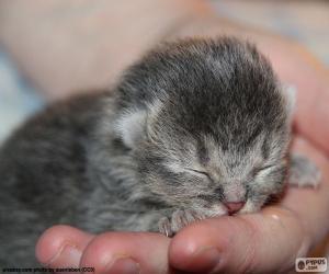 Neugeborene Katze puzzle