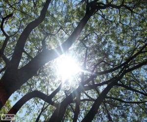 Niederlassungen und Sonne puzzle