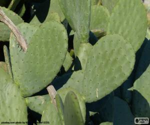 Opuntia Ficus-Indica puzzle