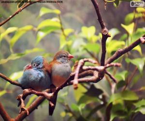 Paar der Vögel puzzle