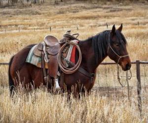 Pferd ein Cowboy puzzle