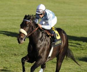 Pferd und Jockey auf einem Pferderennen auf der Rennbahn puzzle