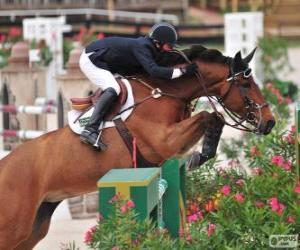 Pferd und Reiter vorbei ein Hindernis in einem Springen bestreiten puzzle