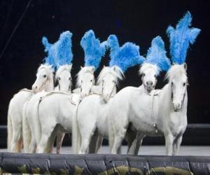 Pferde einem zirkus puzzle