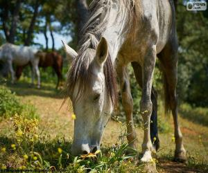 Pferde grasen puzzle