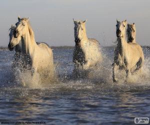 Pferde im Wasser puzzle