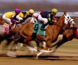 Pferderennen - Gallopprennen auf der rennbahn puzzle