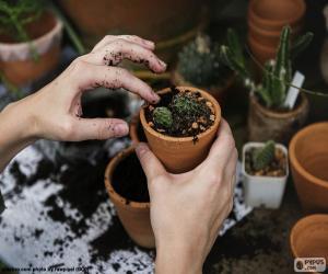 Pflanzen einen Kaktus puzzle