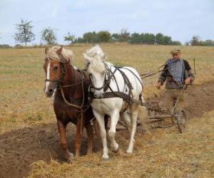Pflügen mit Pferden ebnet puzzle