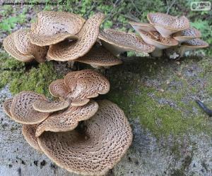 Pilze auf einem Baumstamm puzzle