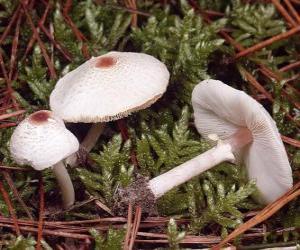 Pilze mit langen Stiel puzzle