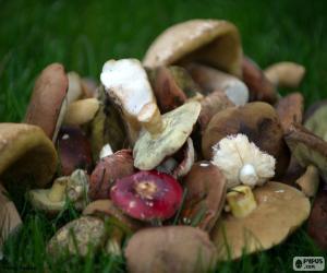 Pilze verschiedener Typen puzzle