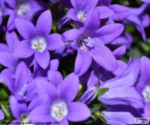 Purpur Farbe puzzle