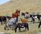 Herde von wilden pferden
