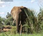 Elefanten in den dschungel