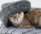 Katze und Schal