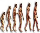 Ablauf der evolution des menschen aus australopithecus Lucy zu modernen menschen weitergabe unter anderem von männern Heidelberg, Peking, Neandertaler und Cromagnon