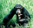 Affen sitzen auf dem boden