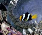 Fisch im Meeresboden