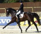 Pferd und mitfahrer, die eine dressurreiten durchführen