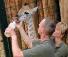 Zoo oder tierpark halter fütterung eine giraffe
