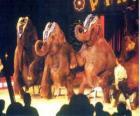 Elephants trained