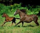 Pferd und fohlen  trab über die prärie