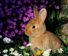 Kaninchen unter den Blumen
