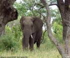 Elefant Essen grass