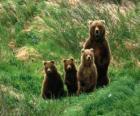 Eisbär familie