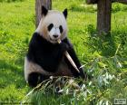 Panda Essen