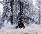 Cowboy reitet der ein pferd