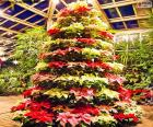 Weihnachtsbaum aus poinsettie