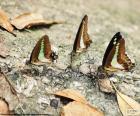Schmetterlinge auf einem Baumstamm