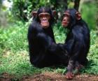 Zwei Affen sitzen auf dem Boden
