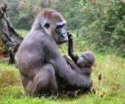Familie von gorillas