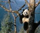 Panda auf einem Baum