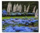 Hortensien und exotische Blumen