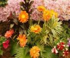 Gemischte Blumen