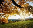 Nachfolge von sanften Hügeln mit einigen Bäumen