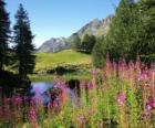 Ein See in den Vordergrund Blumen und hohen Berg Büro