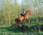 TLG Pferdesport Wettbewerb, prüft die Verständigung zwischen Pferd und Reiter durch verschiedene Tests.