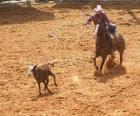 Cowboy reitet der ein pferd und einen kopf des viehs mit dem lasso sich verfängt