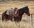 Pferd ein Cowboy