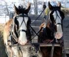 Zwei Pferde ziehen einen Wagen